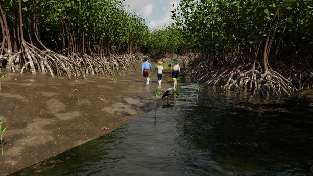 Mangrove Forest 3.jpg
