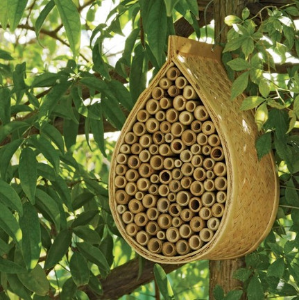 Bees%20house_edited.jpg