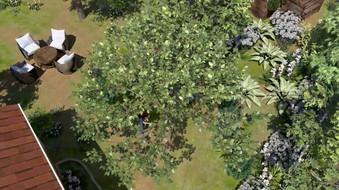 My Tree 3.jpg