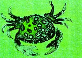 crab1010.jpg