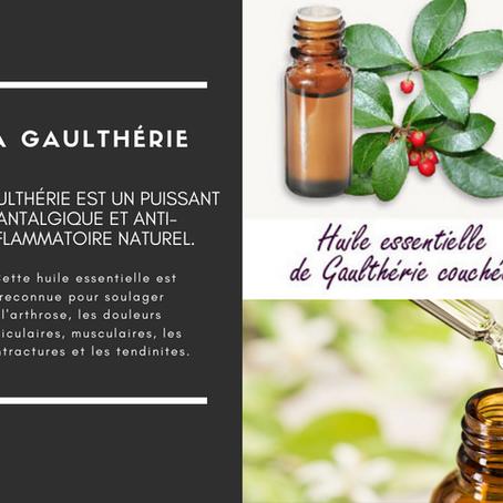 La Gaulthérie pour vos douleurs
