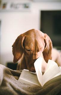 reading dog.jpg