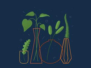 plants in vases