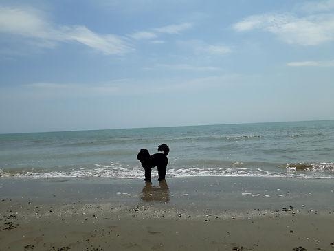 Pudel am Meer