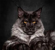 Lotion nettoyante blessure - chat - Aromathérapie