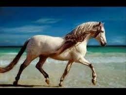 Lotion nettoyante blessure -  cheval 250 ml - Aromathérapie