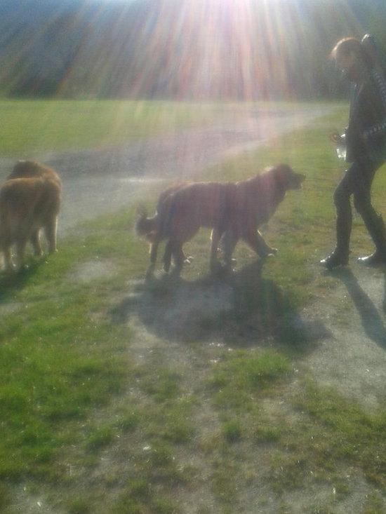 Estrela Mountain Dog Breeder