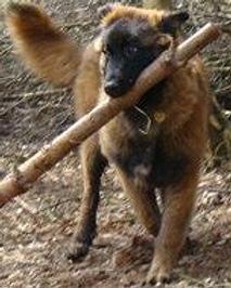 Estrela Mountain Dog Care