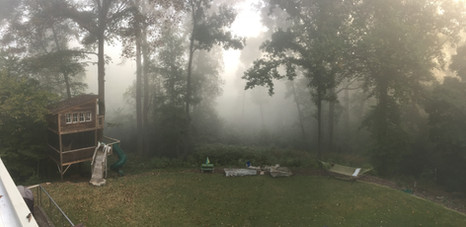 Trailside Treehouse Fog