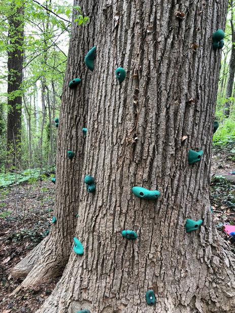 Trailside Treehouse Climbing Tree
