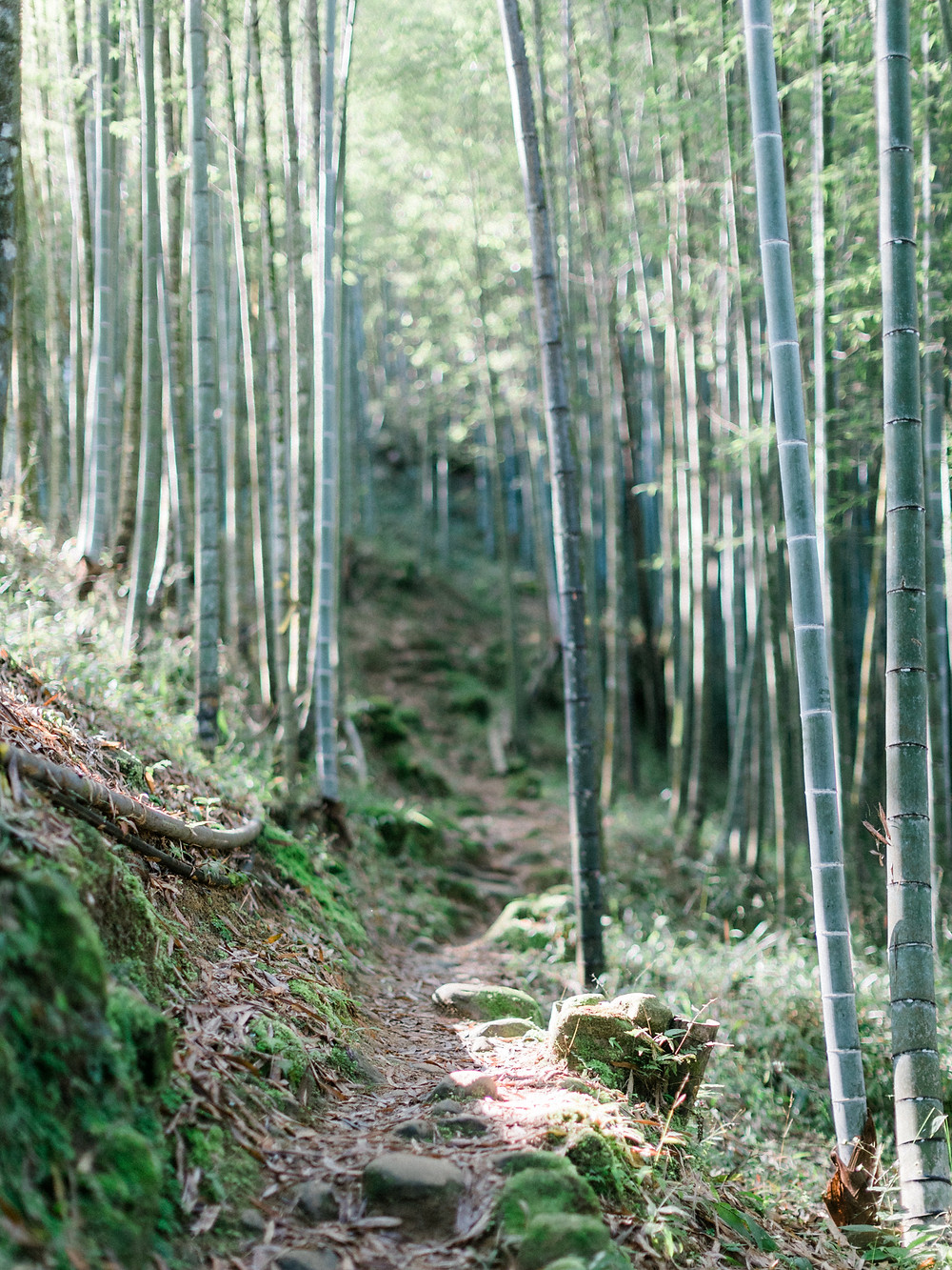 Elegant Bridal Inspiration in Bamboo Forests of Taiwan Arther Chen Photography