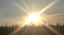 Cormorants Sun Salutation Execution Rocks