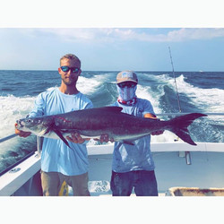 Wallace's Bait & Tackle - Cobia
