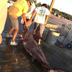 Wallace's - 302 lbs Swordfish