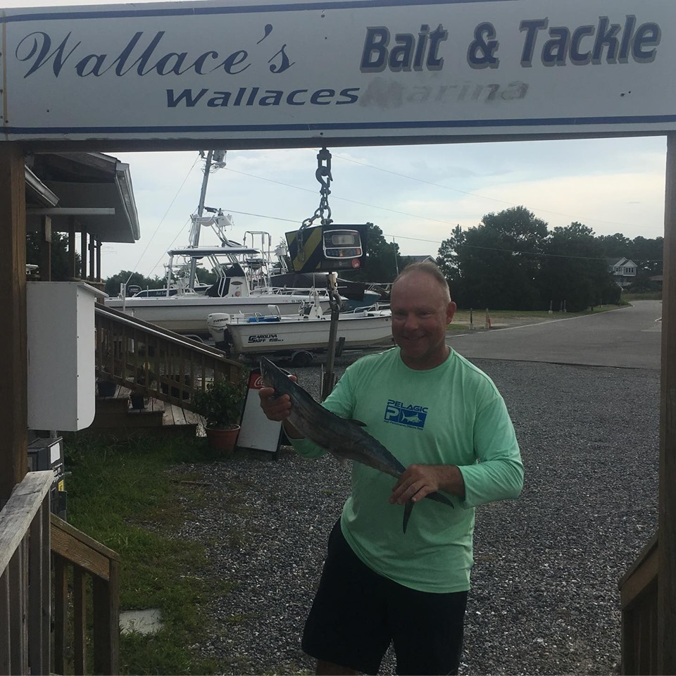 Wallace's - Spanish Mackerel