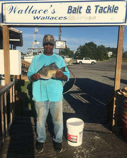 Wallace's Bait & Tackle
