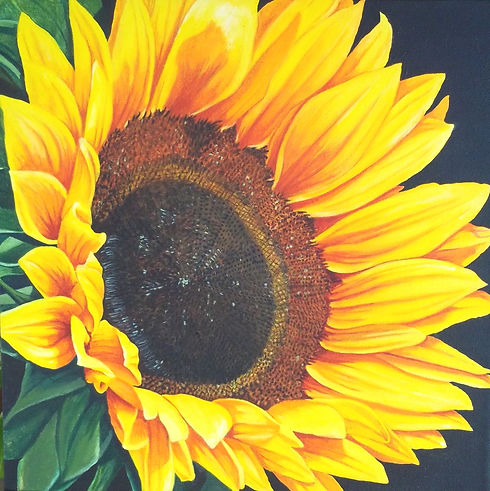 Sunflower 2019 2019-02-11 001.JPG