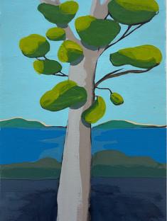Yellow Green Eucalyptus