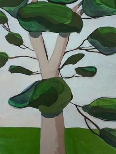 Sap Green Eucalyptus