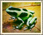 The Dart Frog Blog! Installment: 1