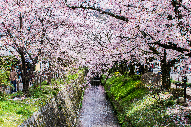 Kyoto_River