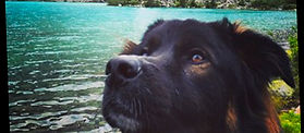 Alert Dog By The Water