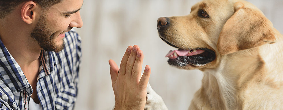 Empathic Dog Training | Hearts & Hounds