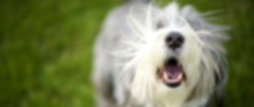 Dog wth mouth open, smiling