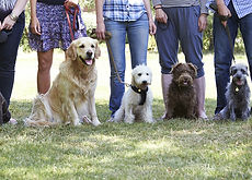 Hearts and Hounds | Vancouver, British Columbia | Dog Life Skills & Specialty Classes