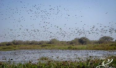 ChassAtlas au Tchad