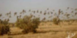 Chasse aux canards au Tchad
