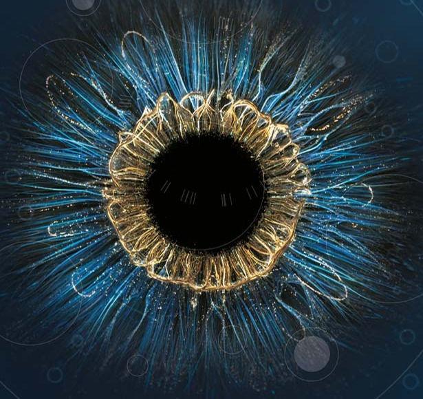 Examen de la vue AVA