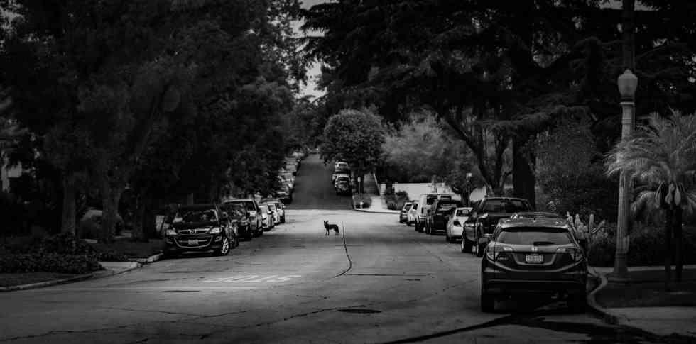 Coyotes-7501.jpg