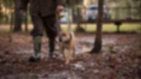 Sorrell American Pit Bull Terrier APBT