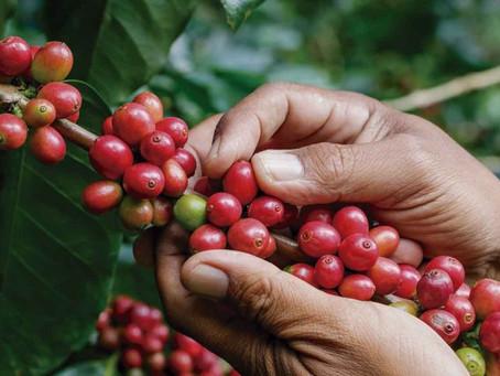 Historia del Café de Costa Rica, primeros años