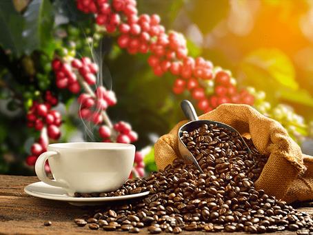 La exportación del café