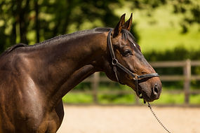 Aimee, Watson, Eventing, Bordeau, Horse, British, BE, vdl tenerife, stallion, eventer