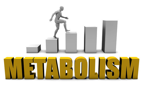 jumpstart your metabolism BMR
