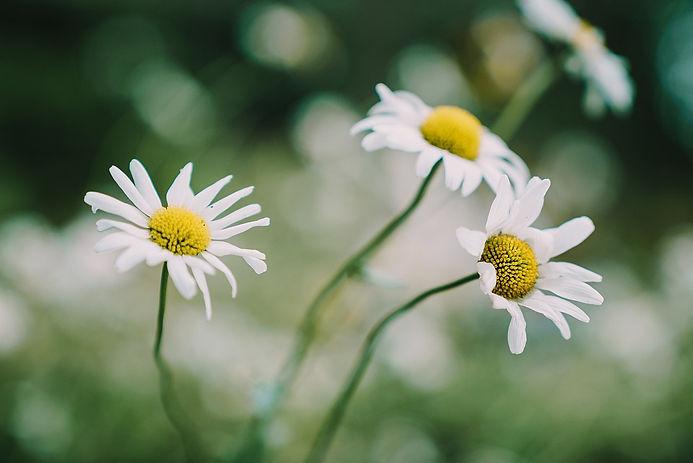 flowers-4340566_960_720.jpg