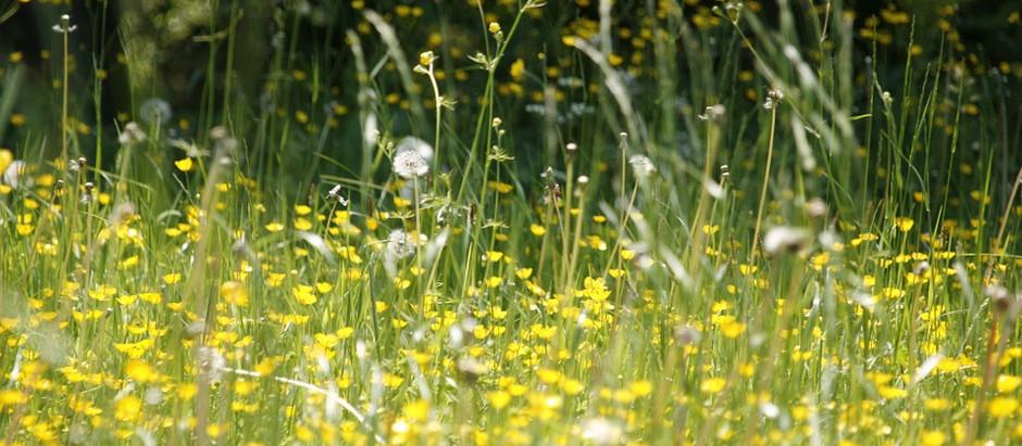 אביב הגיע, אלרגיה באה?