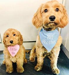 Alfie and Harper