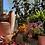 Thumbnail: THE ANNA CARPET