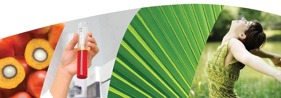 Carotino Healthier Oil Banner