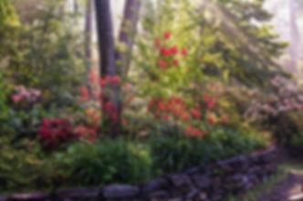 Mill Fleurs Gardens