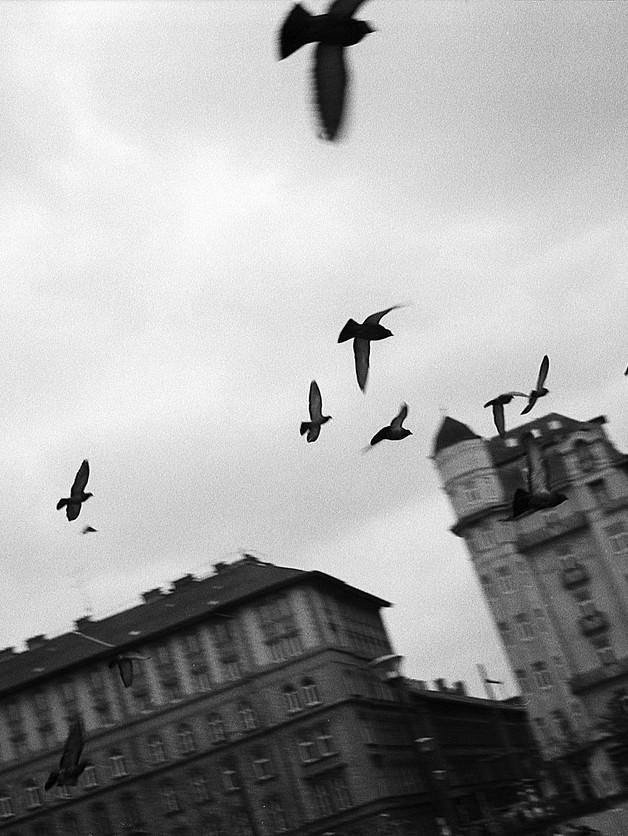 NEW YORK CITY BIRDS GET A BREAK