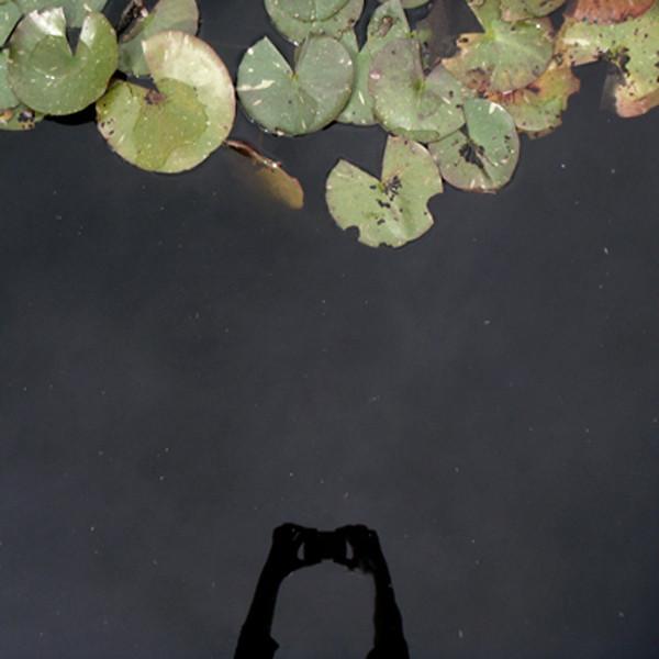 Lilly Pond - Jessica Wascak