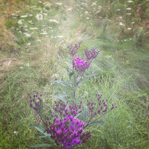 Beautiful field of wildflowers. Just lov