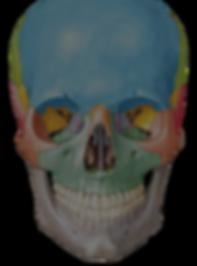 Medical_Skull_dark2_edited_edited.png