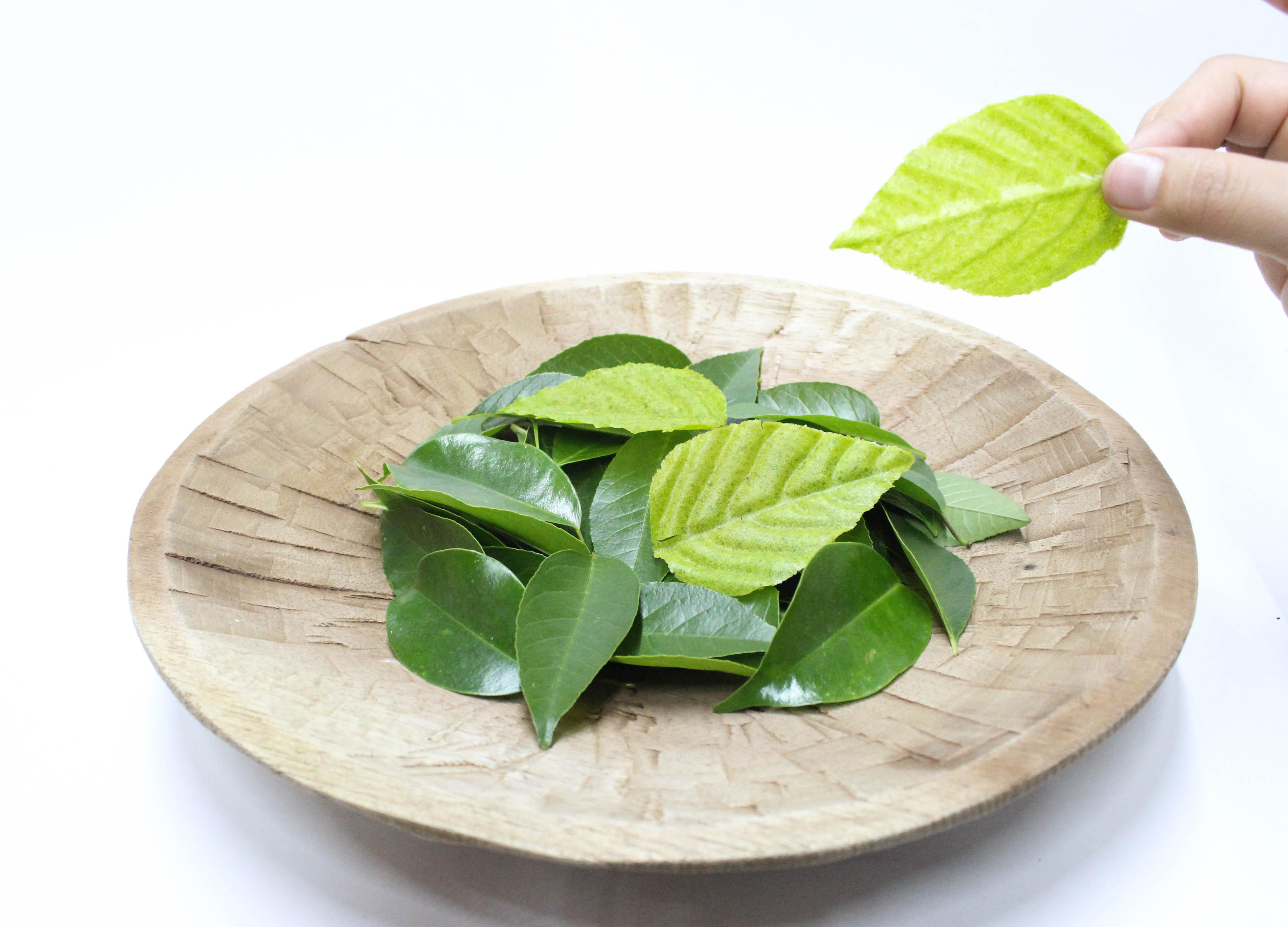 Hoja de chícharo, nopal y lima