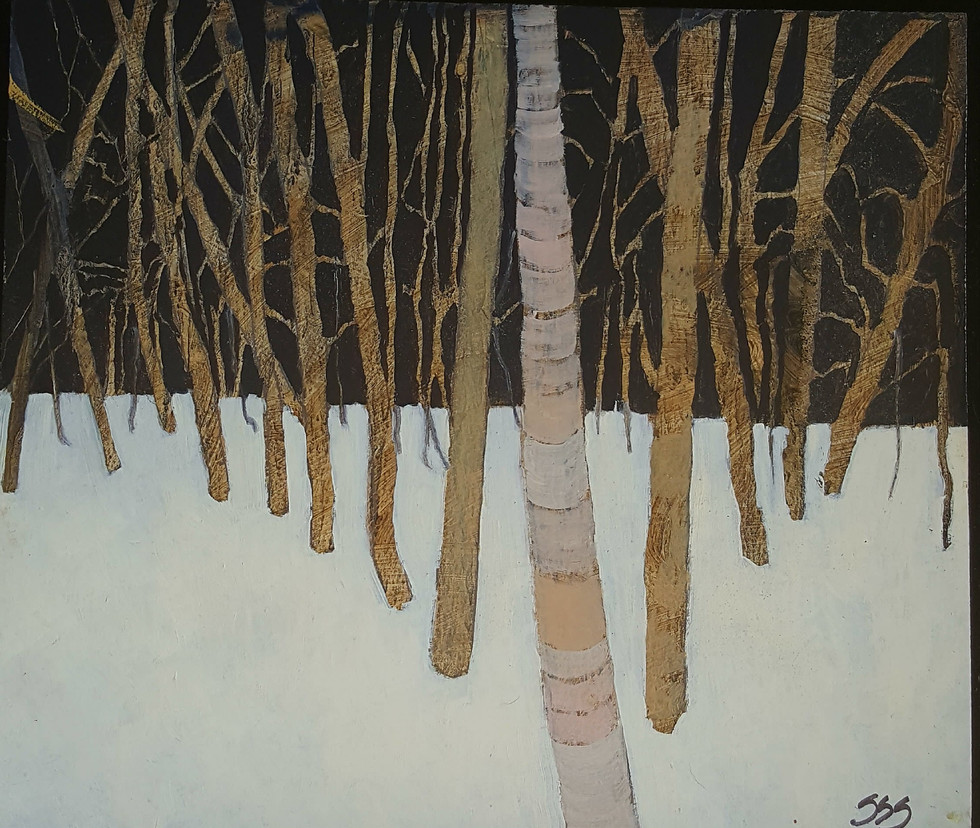 Dark Woods in Snow